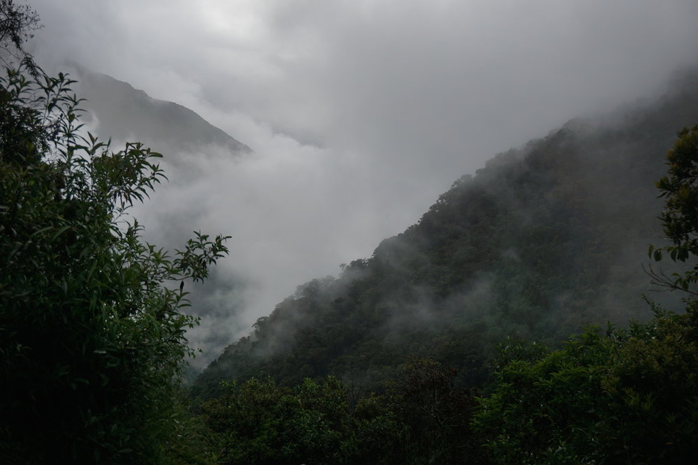 View of the jungle behind an ever-present shroud of clouds.