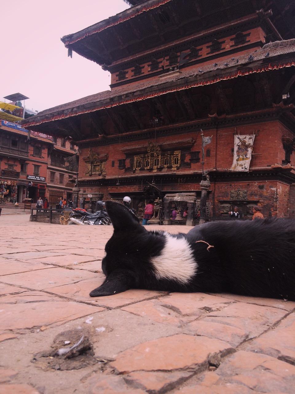 Dog-eye view, Kathmandu