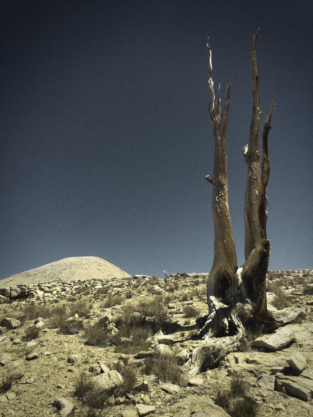 BIghorn Plateau.jpg