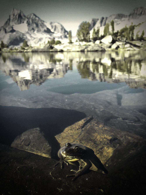 Island Pass Frog.jpg