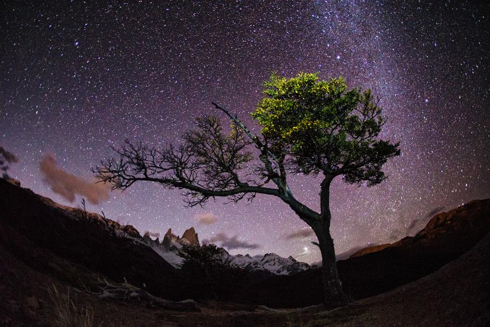 Patagonian Noche.jpg