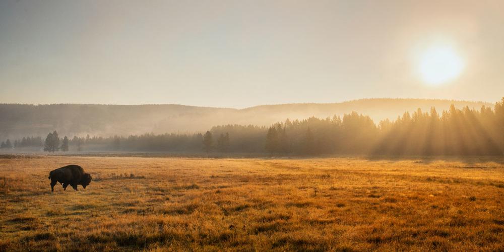 Yellowstone Mist.jpg