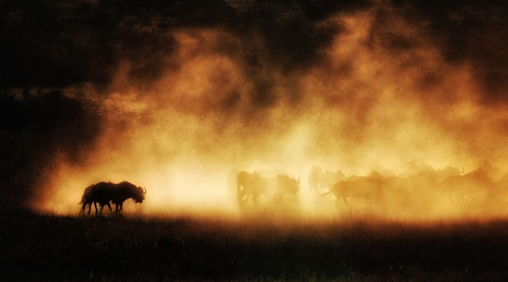 Shadows in Dust.JPG