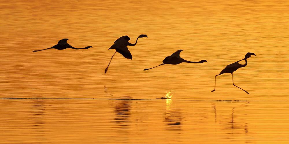 Flamingo Landind.jpg