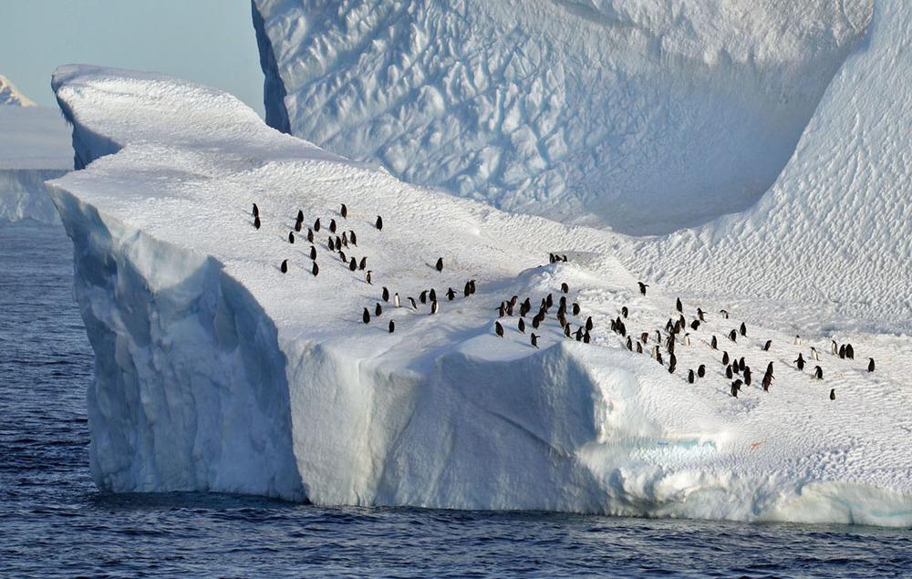 Penguin Berg.jpg