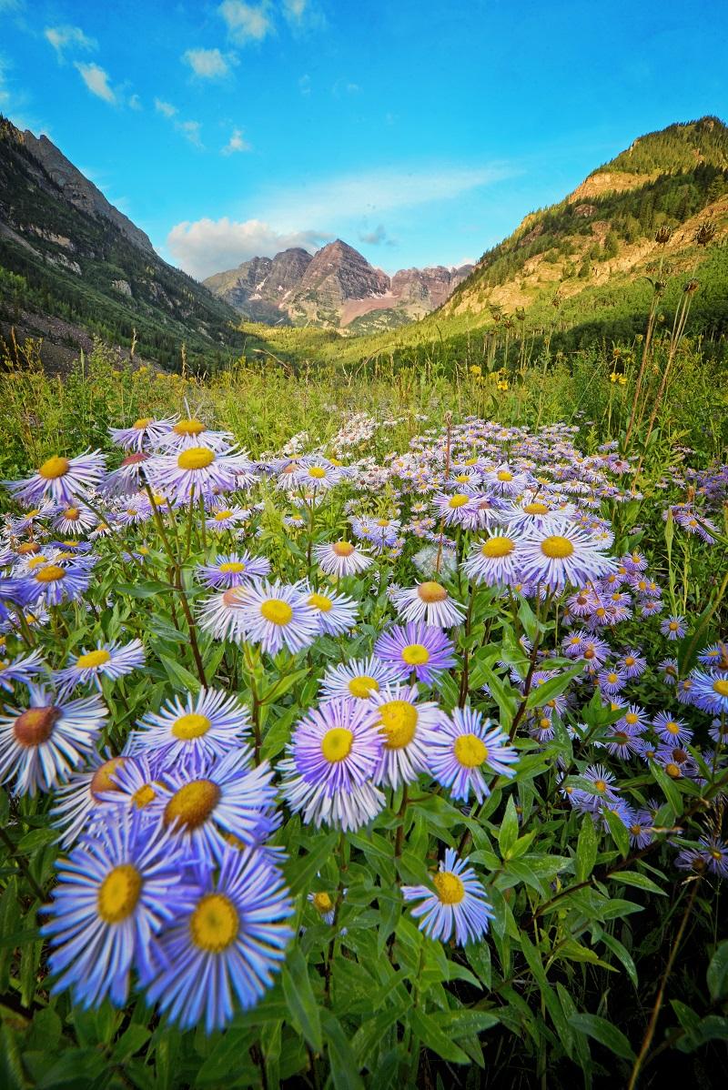 Aspen Spring2.jpg
