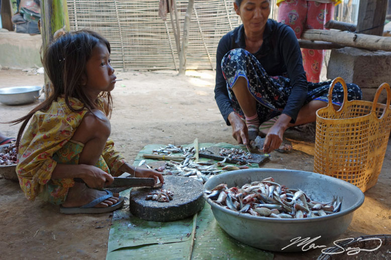 The kids get put to work at an early age. These are Trey Riel fish, which make up one of the most significant fisheries in Cambodia. During the month of January, this one species comprises nearly 50% of the entire catch in the country. It was very exciting being here during the busy time of year when fishing activities were going on all over the place, both day and night!