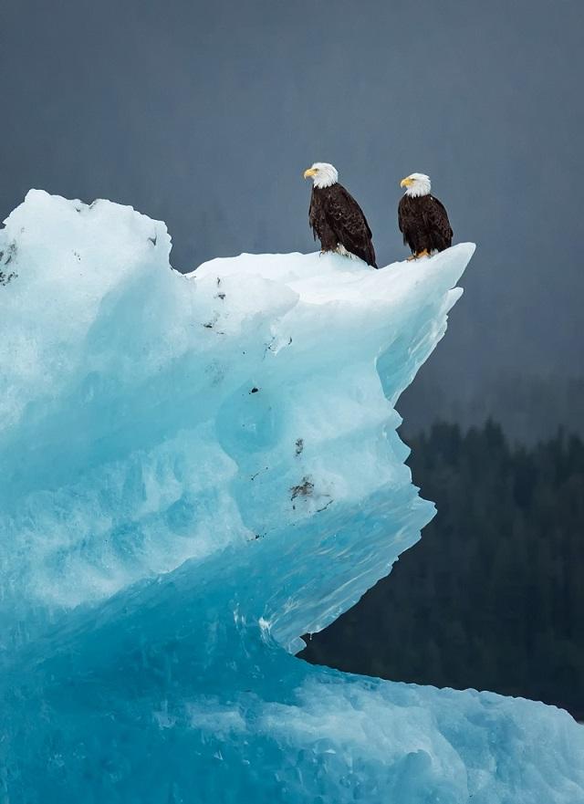 Eagle Iceberg.jpg