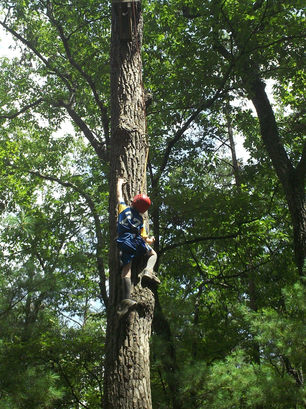 Little Tree Climber.JPG