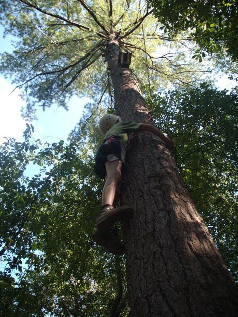 pole-climb.jpg