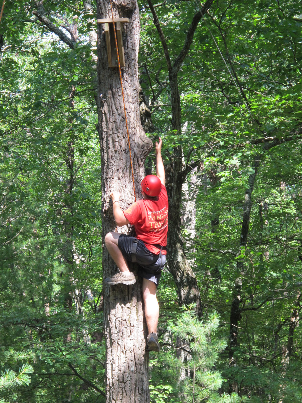 Pole Climb Tree Reach.jpg