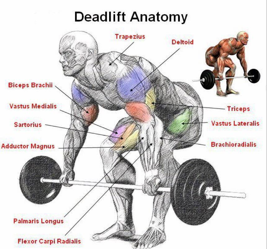 Check out the muscles that are engaged during the deadlift! Source: www.mkellyfitness.com