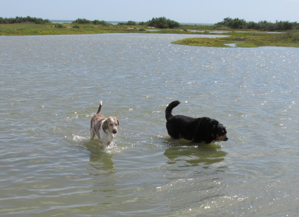 Swimmingdogs.JPG