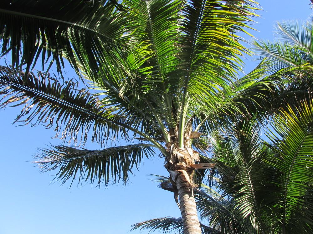 Florida2014 052.JPG