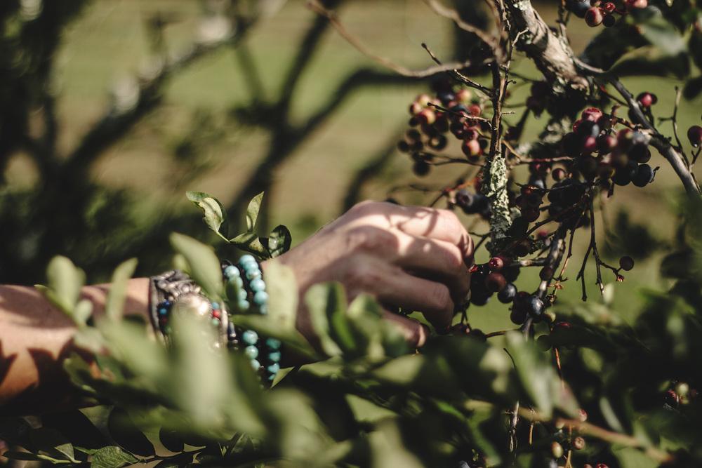 blueberry picking.jpg