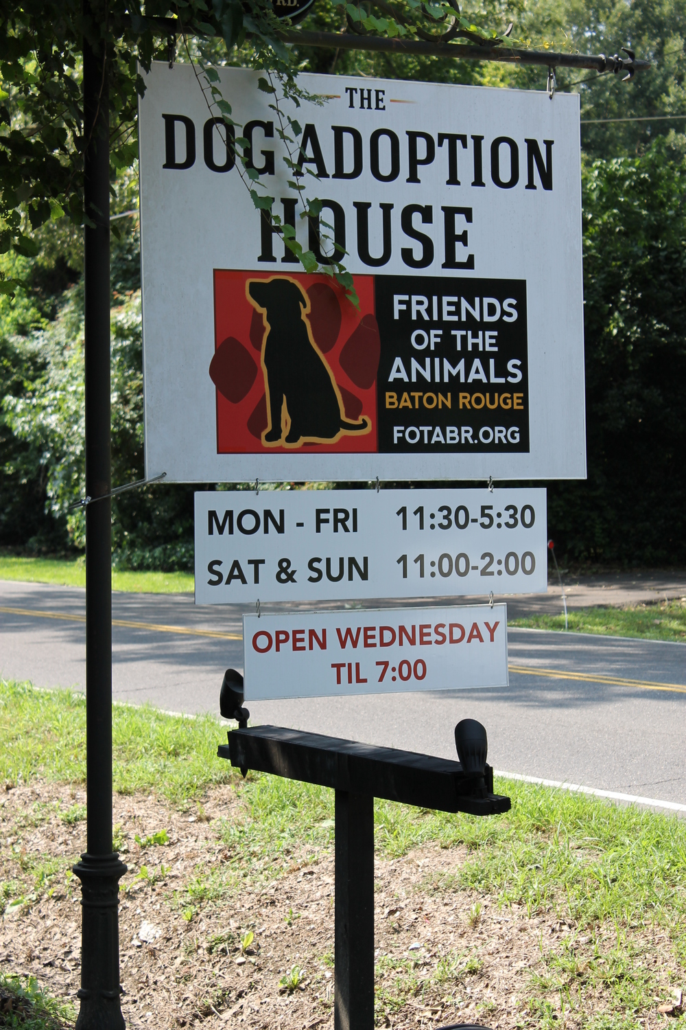 The Dog Adoption House.jpg