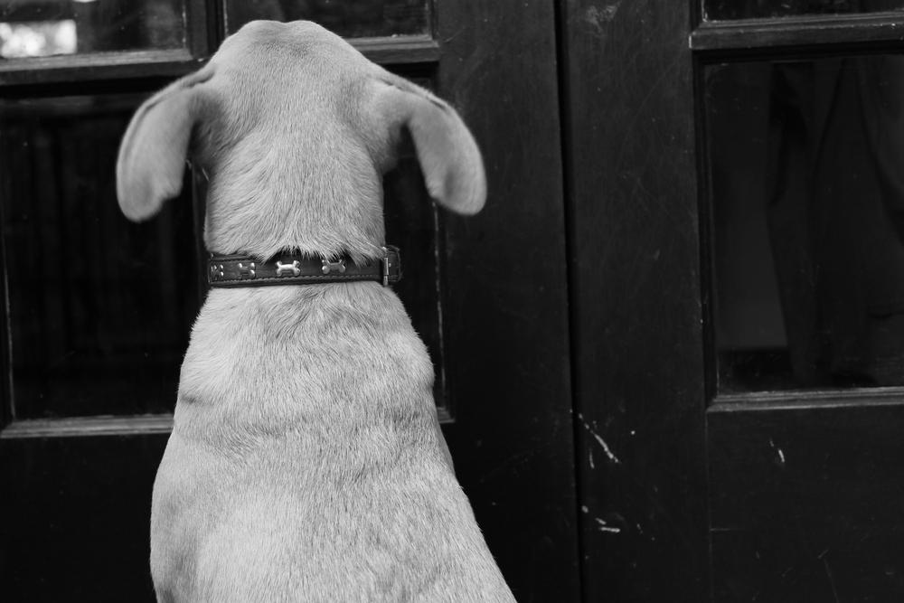 puppy ears.jpg
