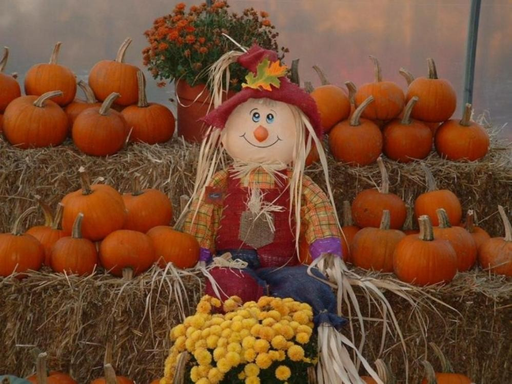 other-autumn-mums-fall-scarecrow-pumpkins-happy-time-harvest-full-hd-1080p-background.jpg