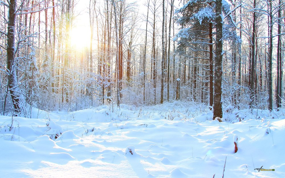 forest-tree-snow-winter-sun.jpg