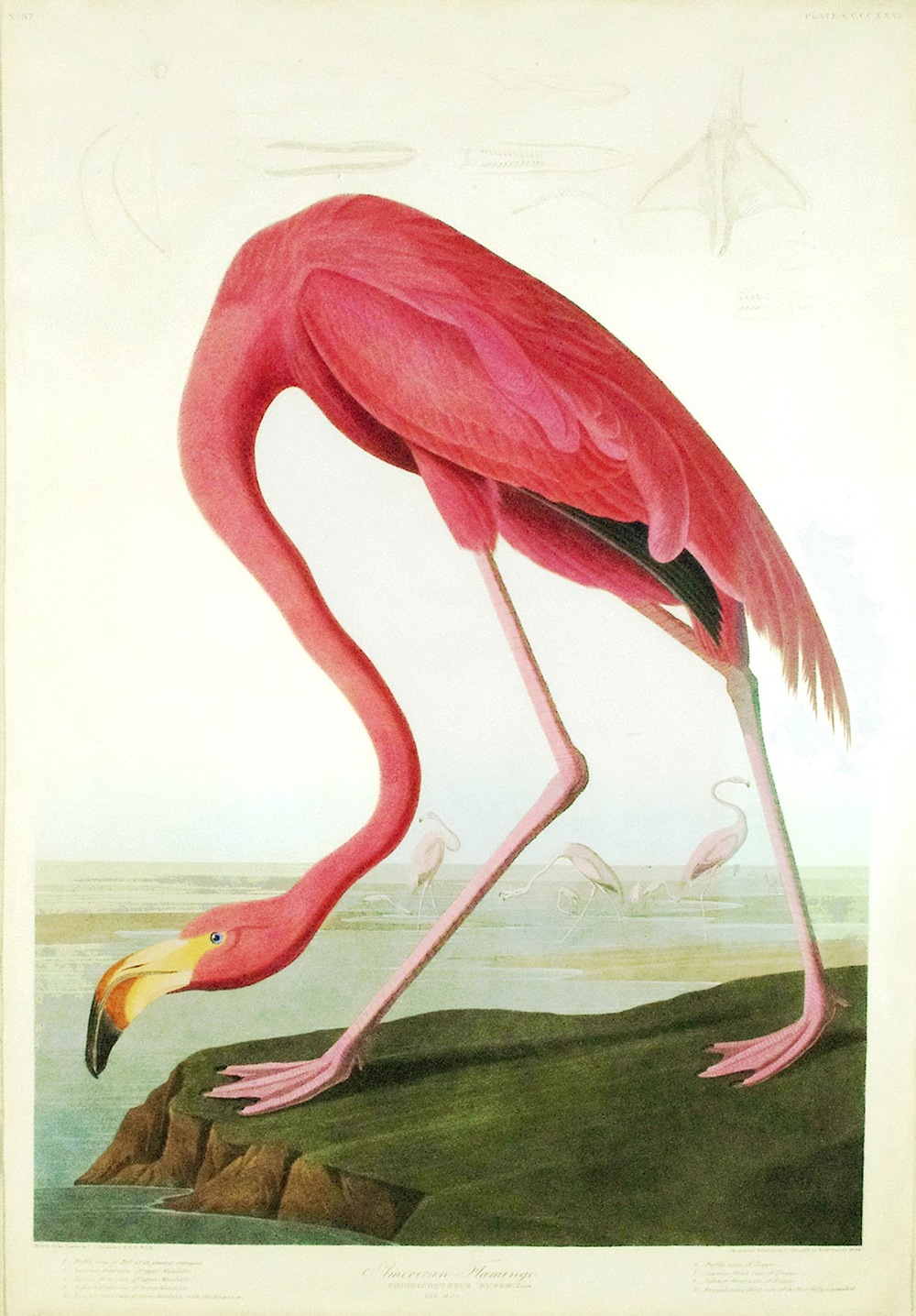 I'm a huge Audubon fan and this flamingo print, which you can get on  One Kings Lane  right now, needs to find a place to live and I think my home has just the spot for it!