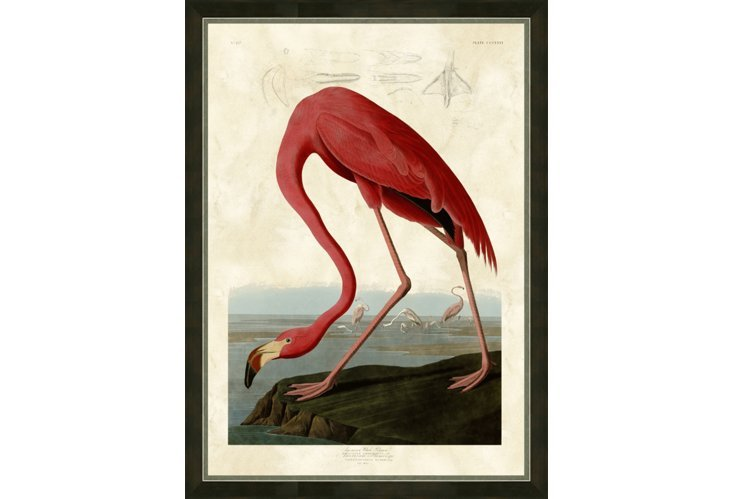 "Audubon Framed Print ""American Flamingo"" from  One Kings Lane"
