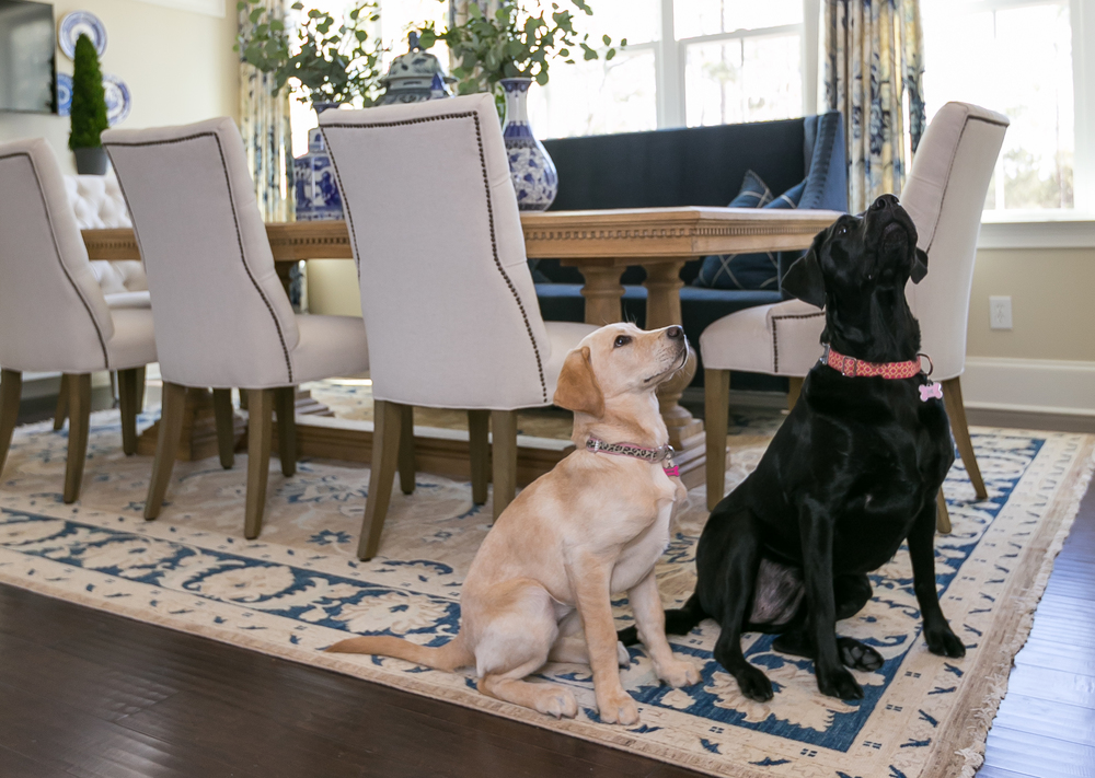 Miss Sophia and Lady Bella sitting for a treat. (Photography by Patrick Brickman)