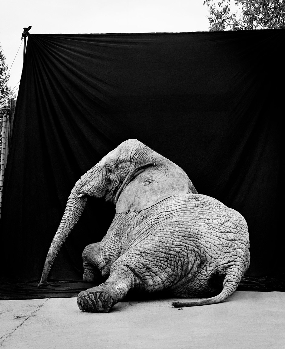 elephant-behind.jpg