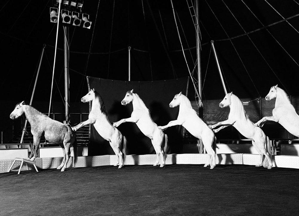 circus-horse-.jpg
