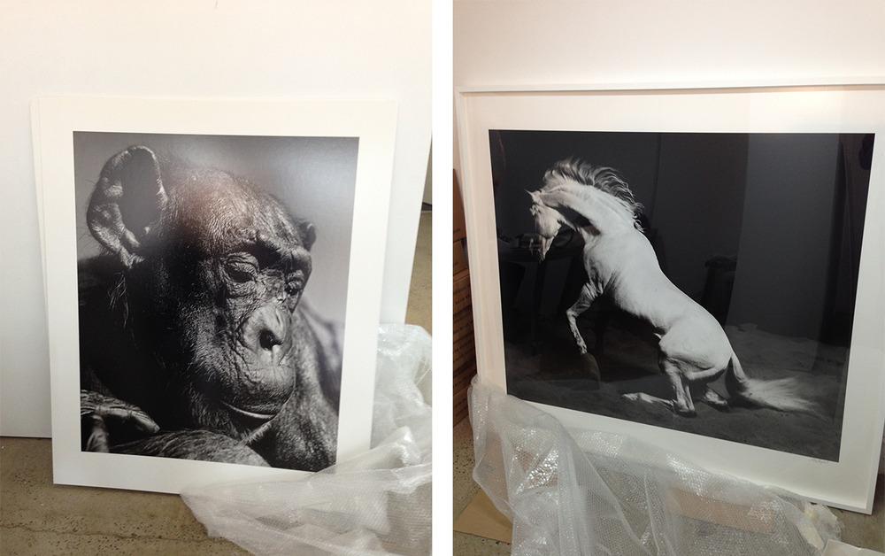 Gary-Heery-Print-Gallery-2.jpg