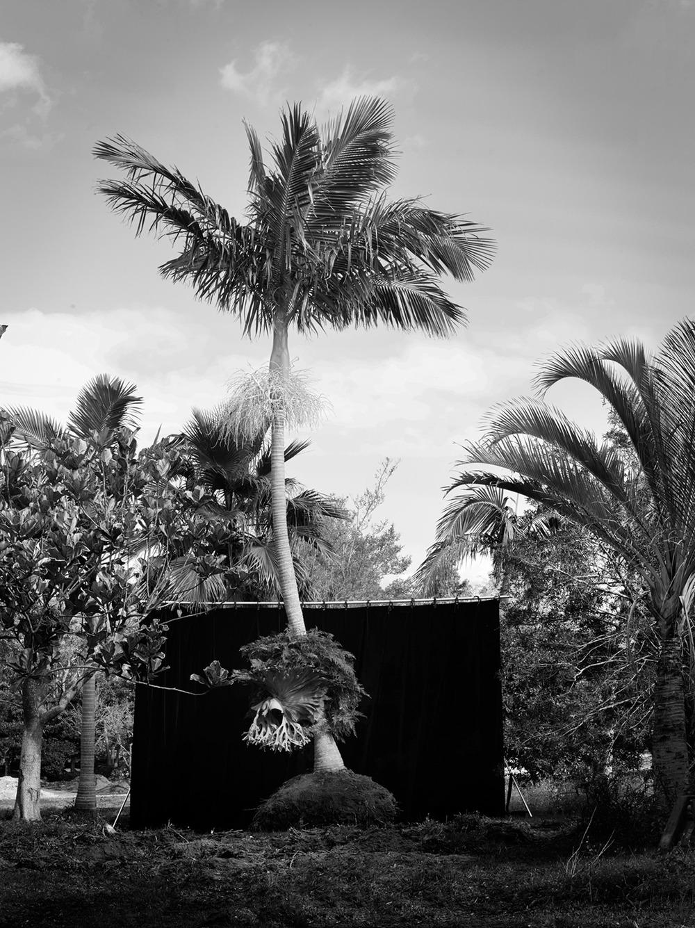 Palm-01-023 EDIT K.jpg