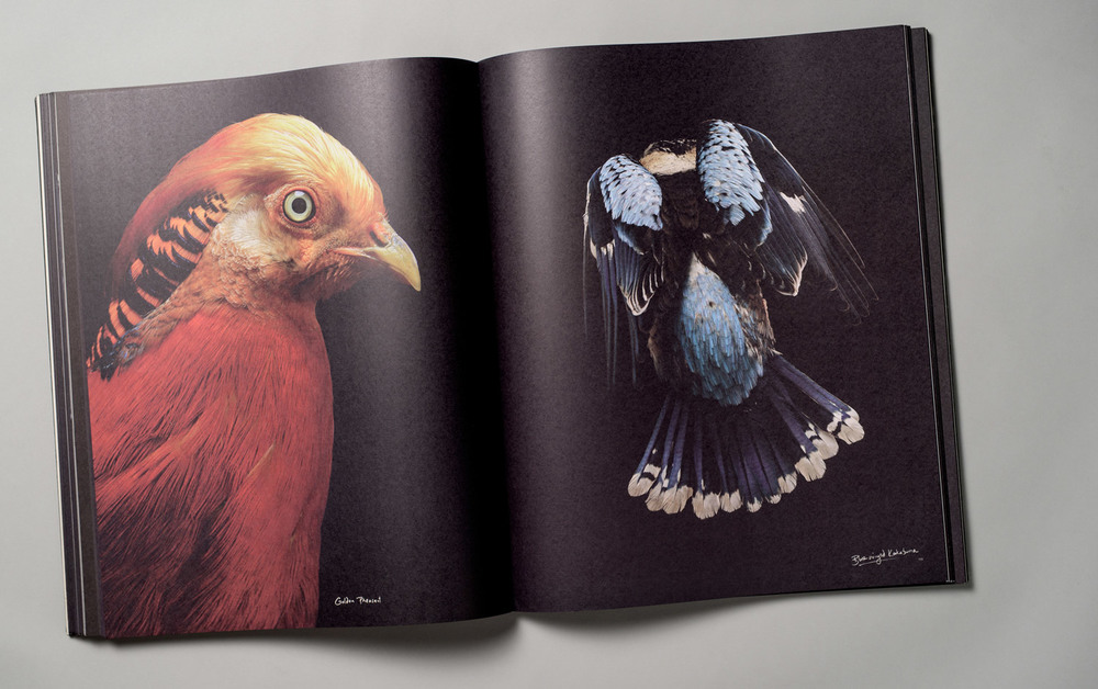 Gary-Heery-Red-Bird-Kookaburra.jpg
