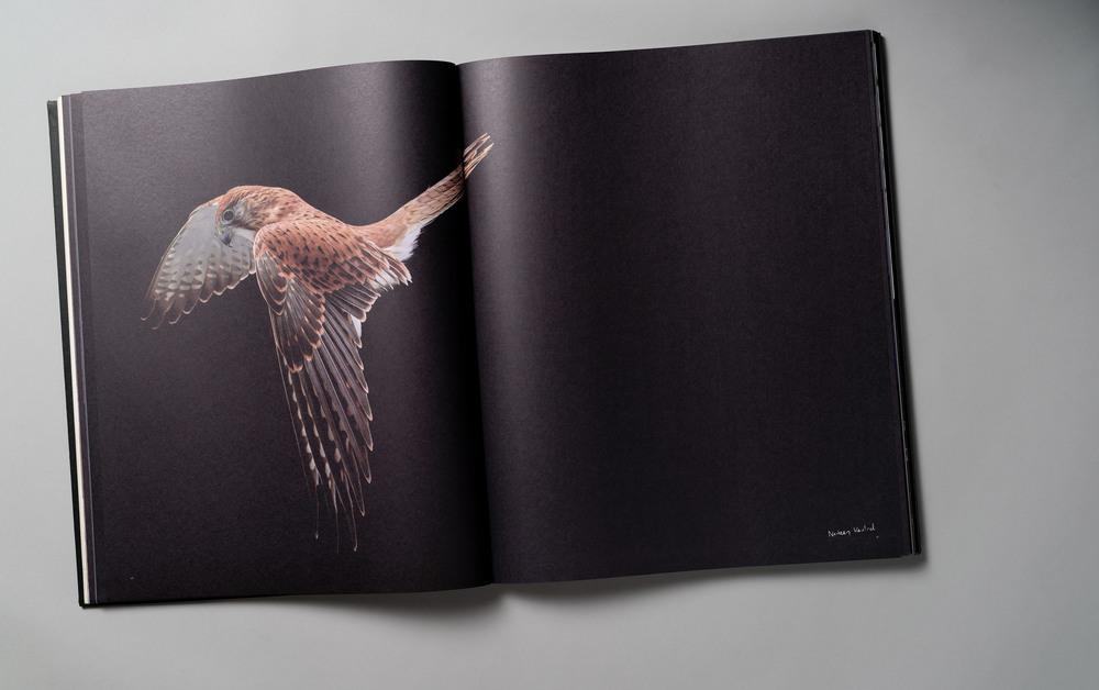 Gary-Heery-Red-Bird.jpg