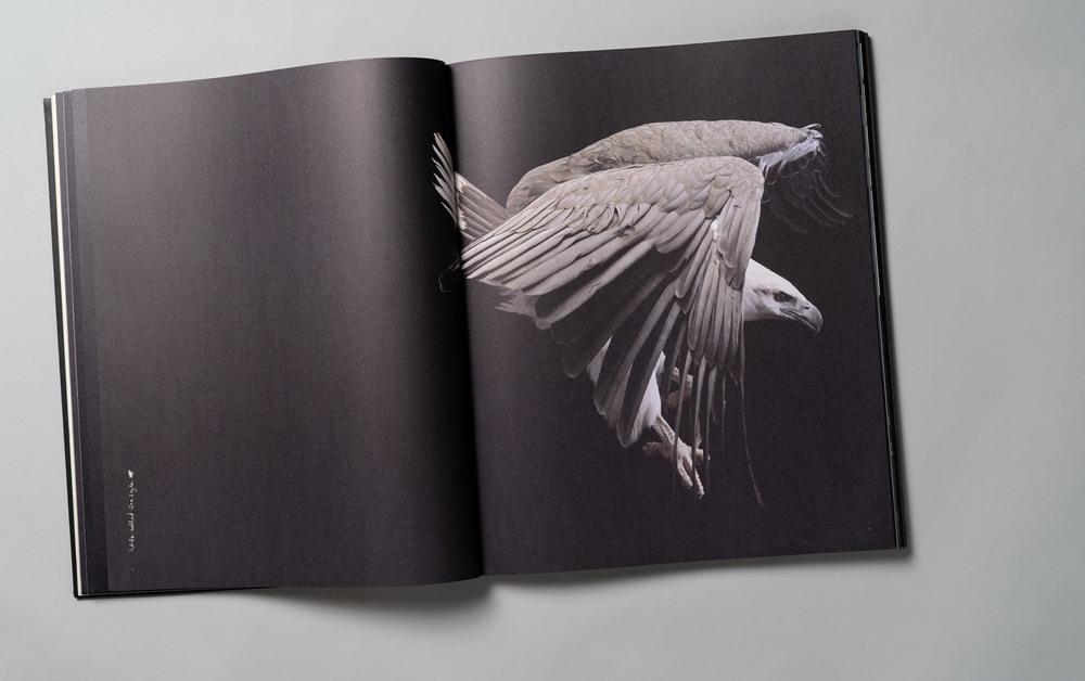 Gary-Heery-Sea-Eagle.jpg