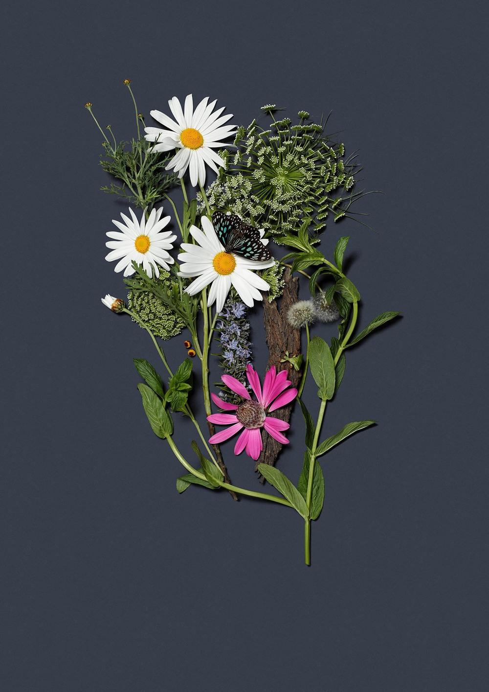 HerbalRecovery_Secondary web.jpg