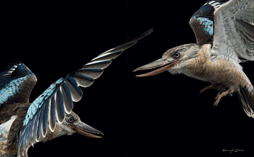 BIRD Gary Heery Book-completemmockup-12 copy.jpg