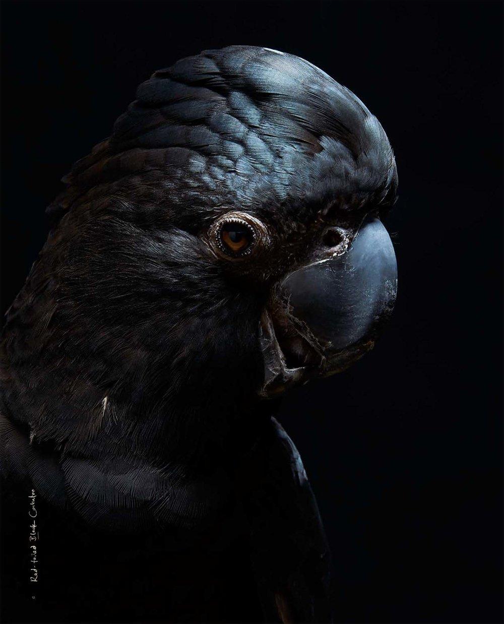 BIRD Gary Heery Book-completemmockup-14.jpg