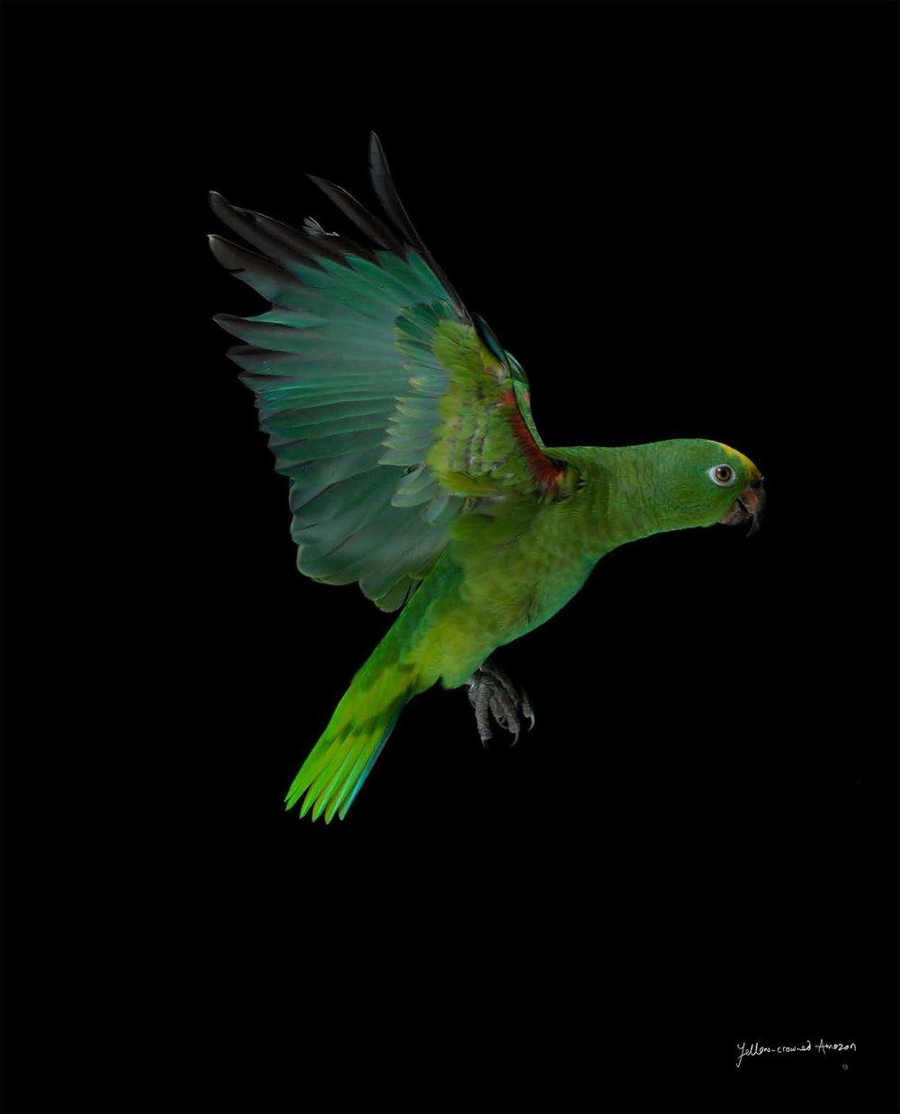 BIRD Gary Heery Book-completemmockup-15.jpg