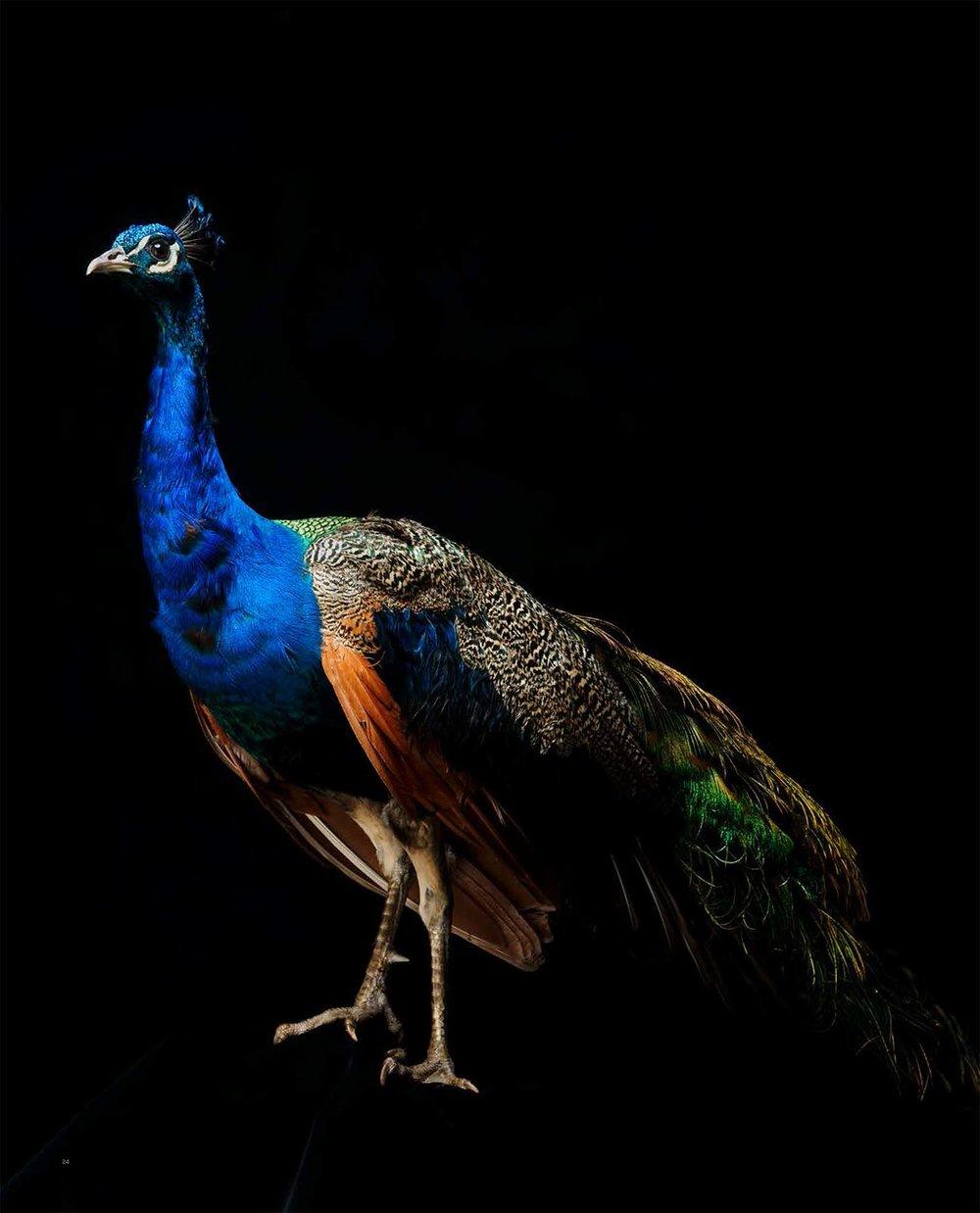 BIRD Gary Heery Book-completemmockup-26.jpg