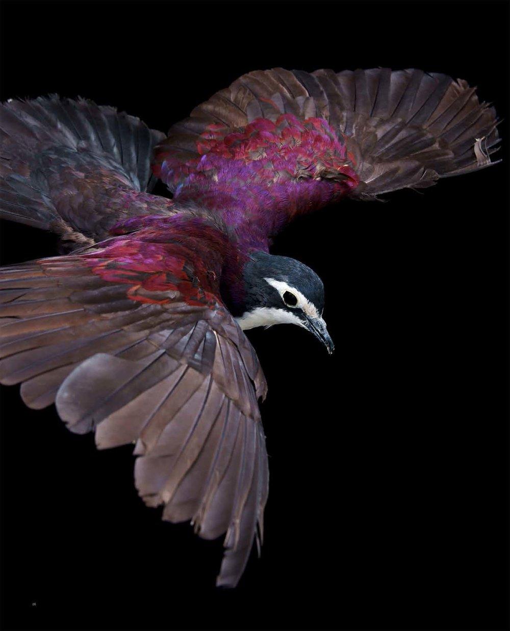 BIRD Gary Heery Book-completemmockup-28.jpg