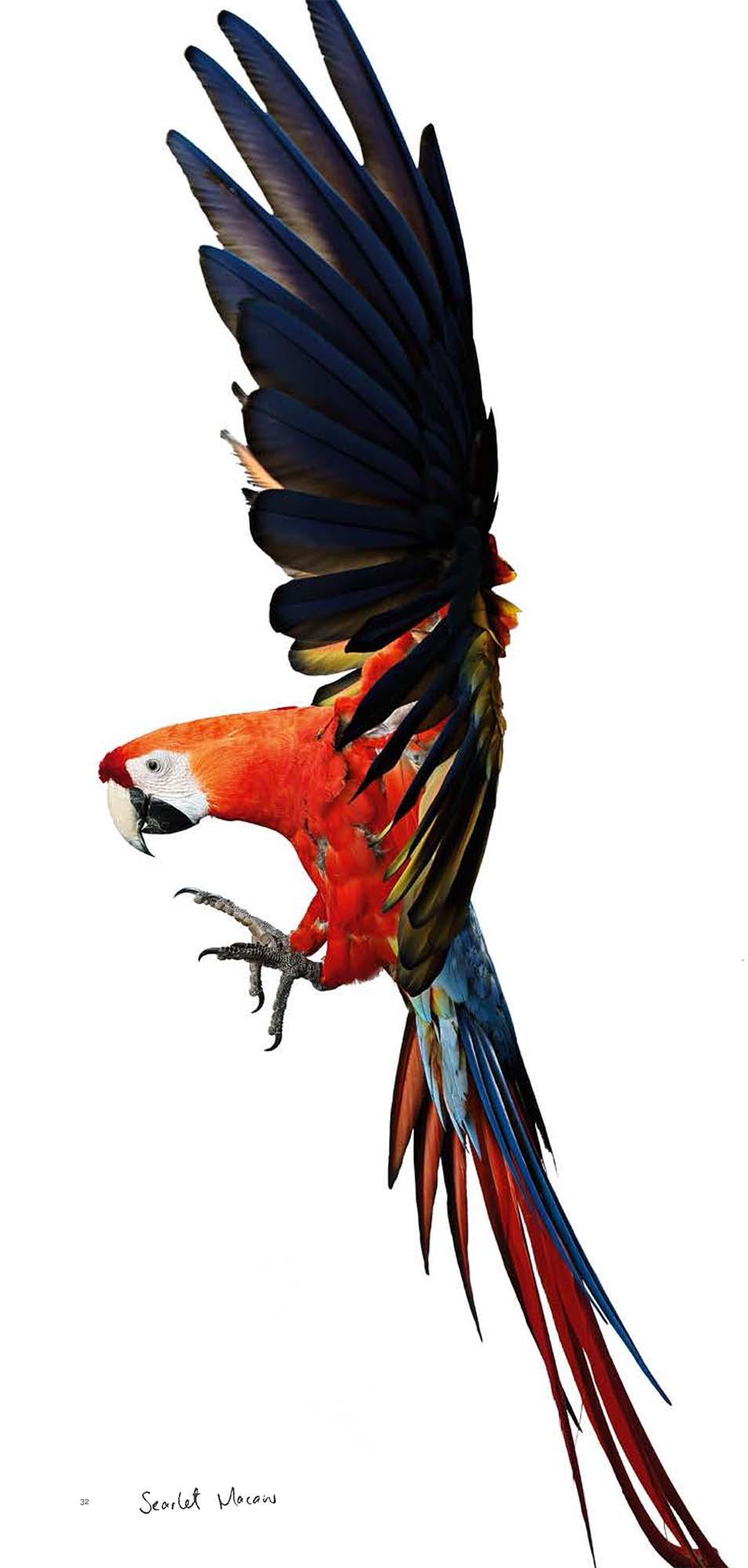 BIRD Gary Heery Book-completemmockup-34.jpg
