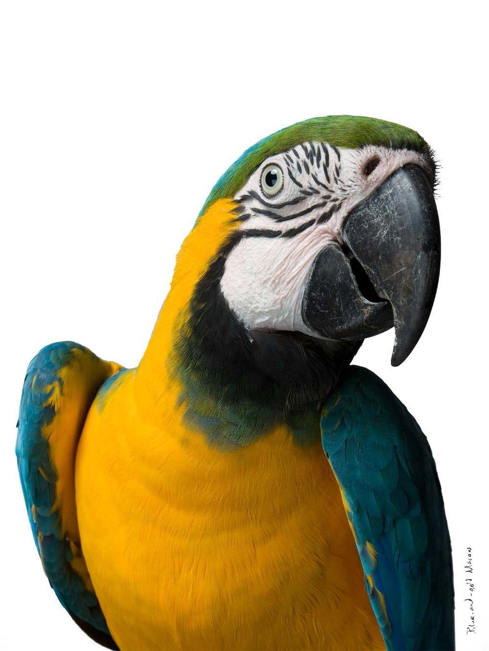 BIRD Gary Heery Book-completemmockup-35.jpg