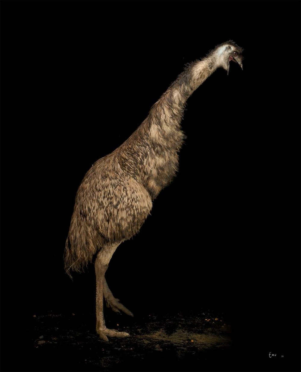 BIRD Gary Heery Book-completemmockup-41.jpg