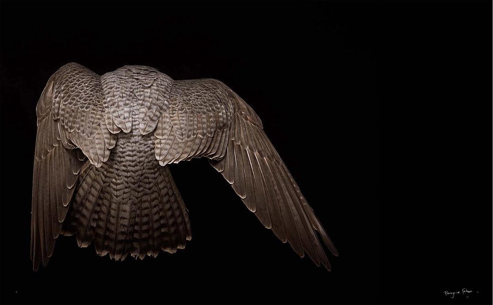BIRD Gary Heery Book-completemmockup-20 copy.JPG