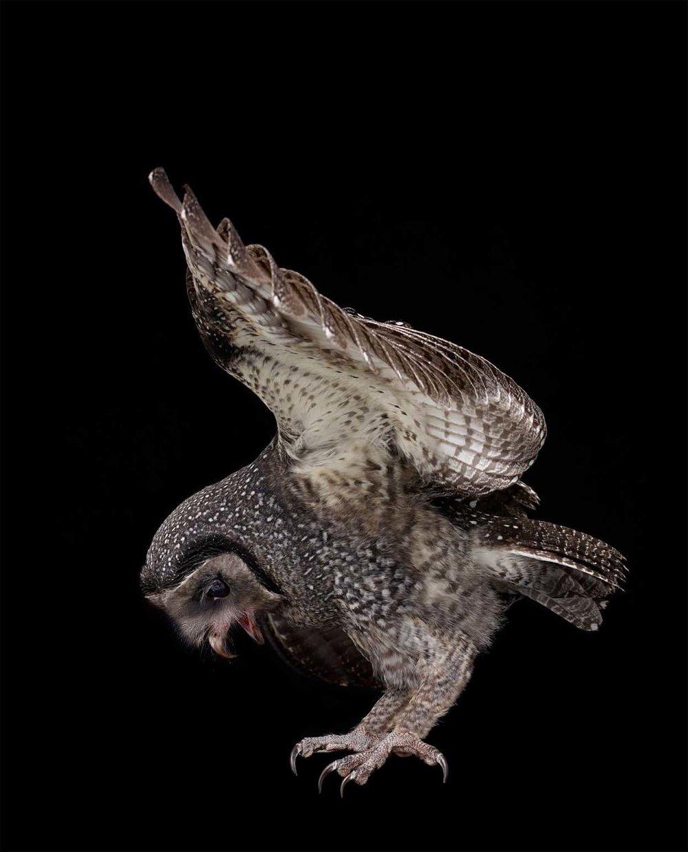 BIRD Gary Heery Book-completemmockup-66.jpg