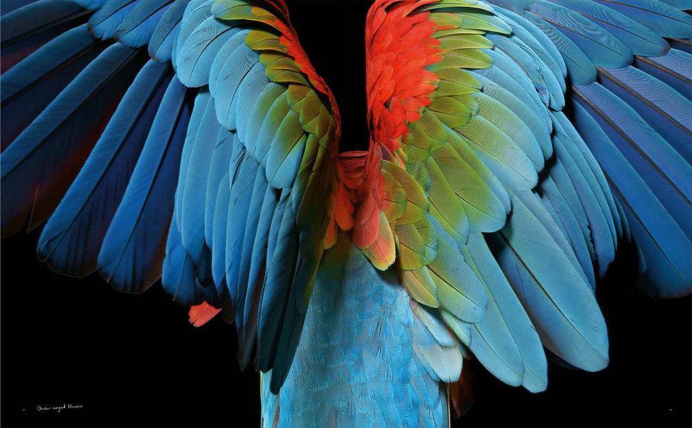 BIRD Gary Heery Book-completemmockup-61.jpg