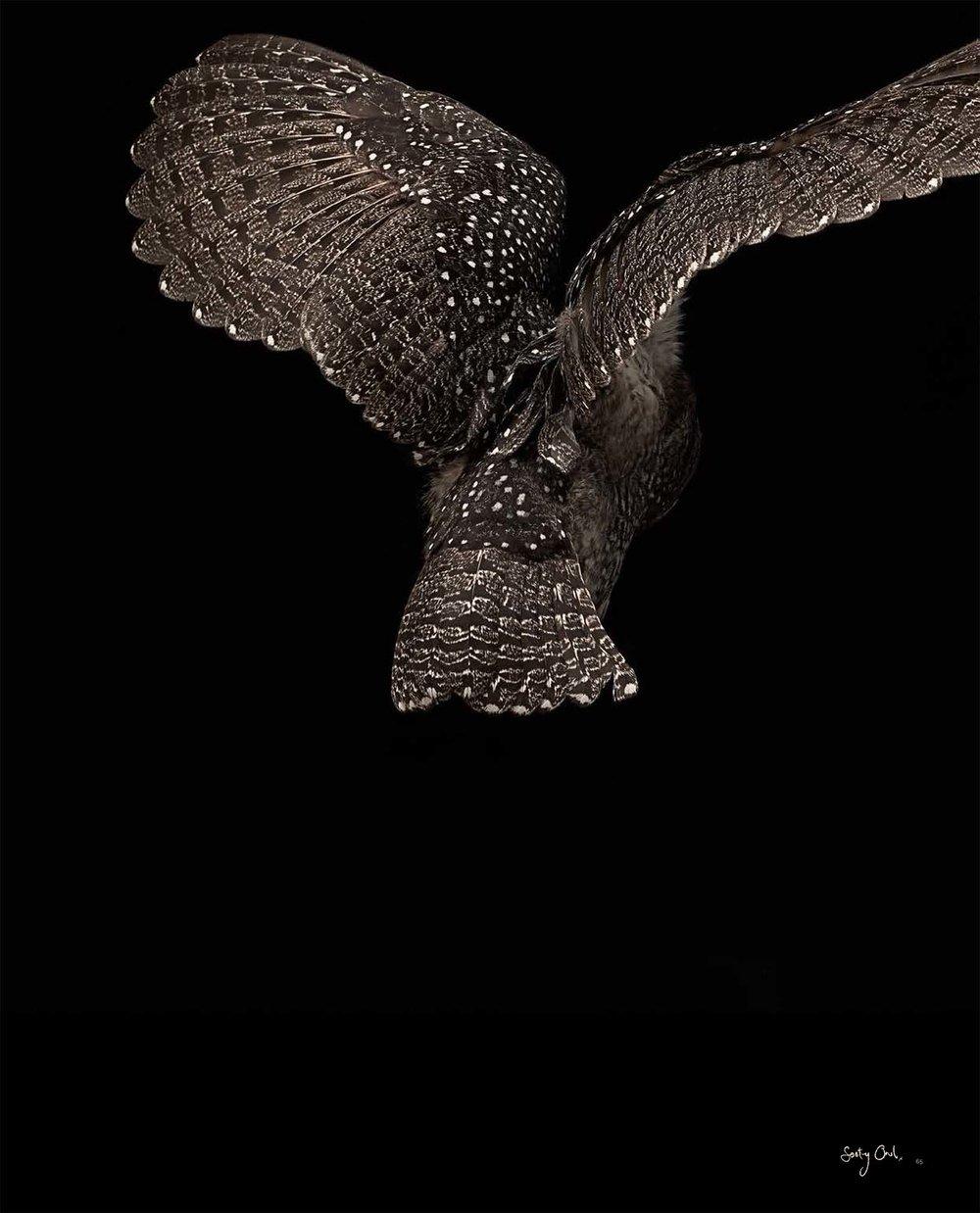BIRD Gary Heery Book-completemmockup-67.jpg