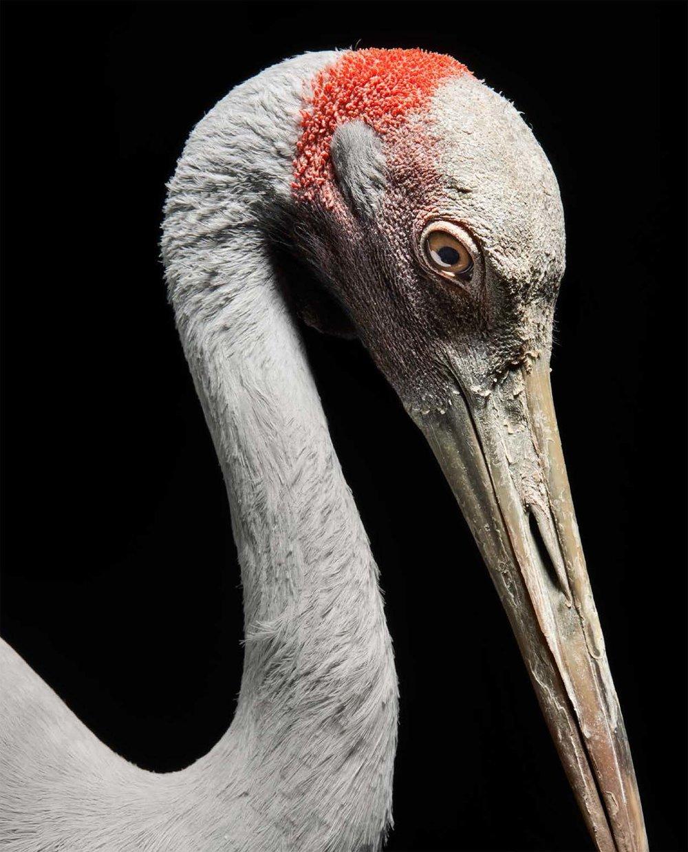 BIRD Gary Heery Book-completemmockup-68.jpg