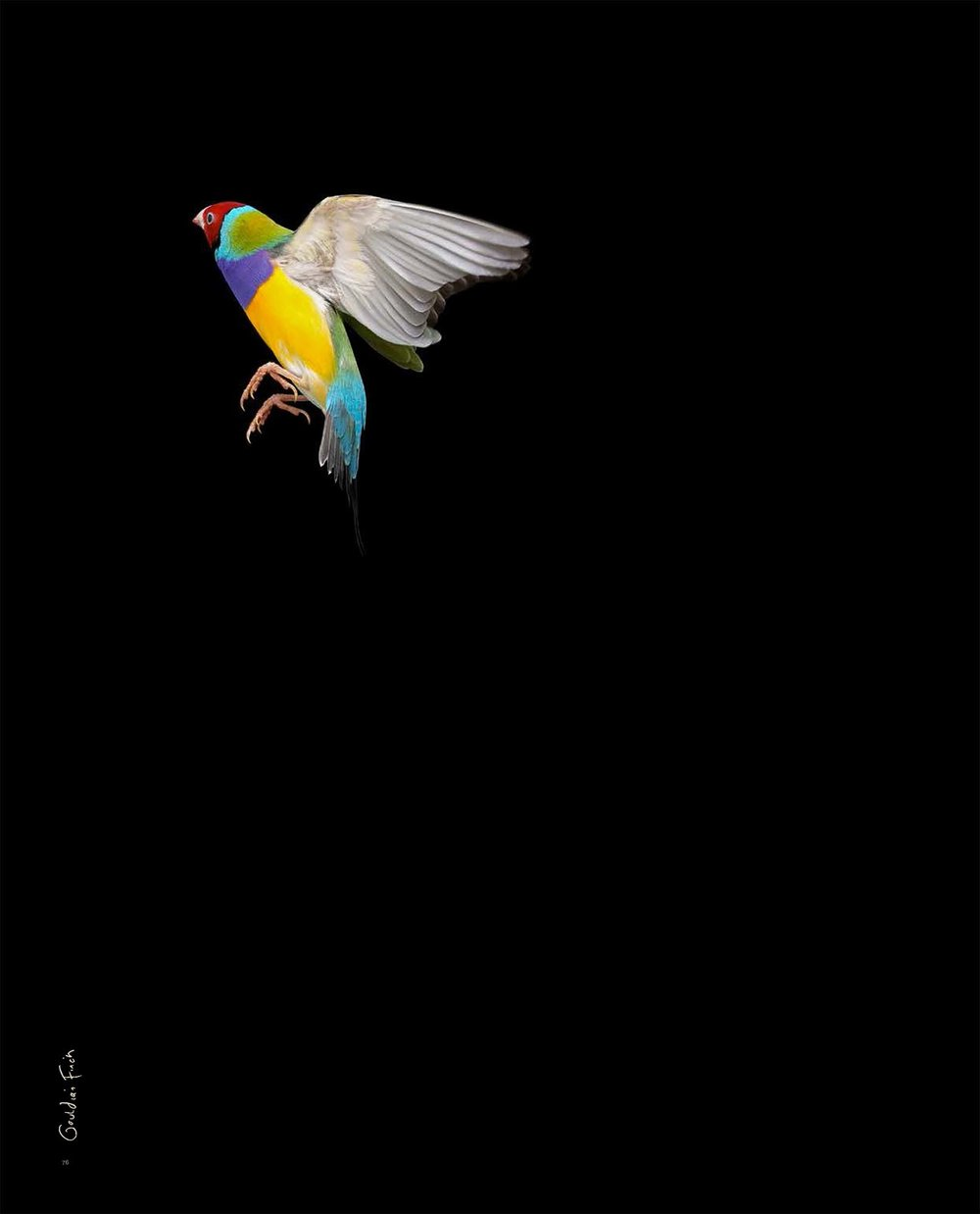 BIRD Gary Heery Book-completemmockup-78.jpg