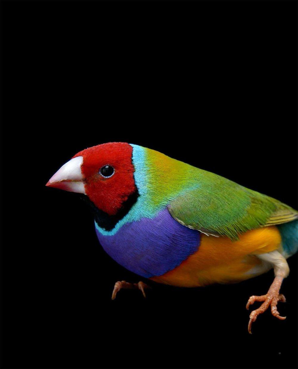 BIRD Gary Heery Book-completemmockup-79.jpg