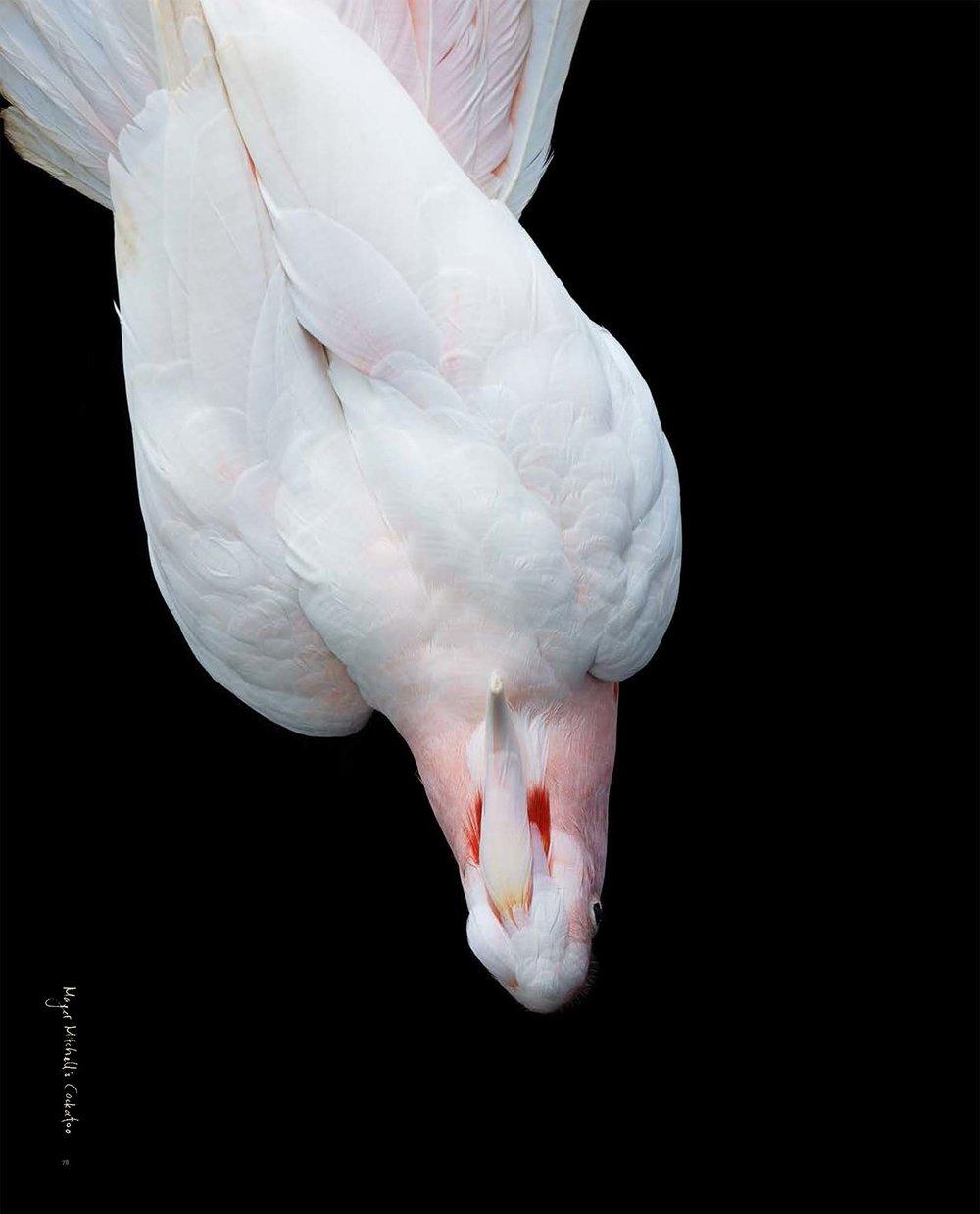 BIRD Gary Heery Book-completemmockup-80.jpg